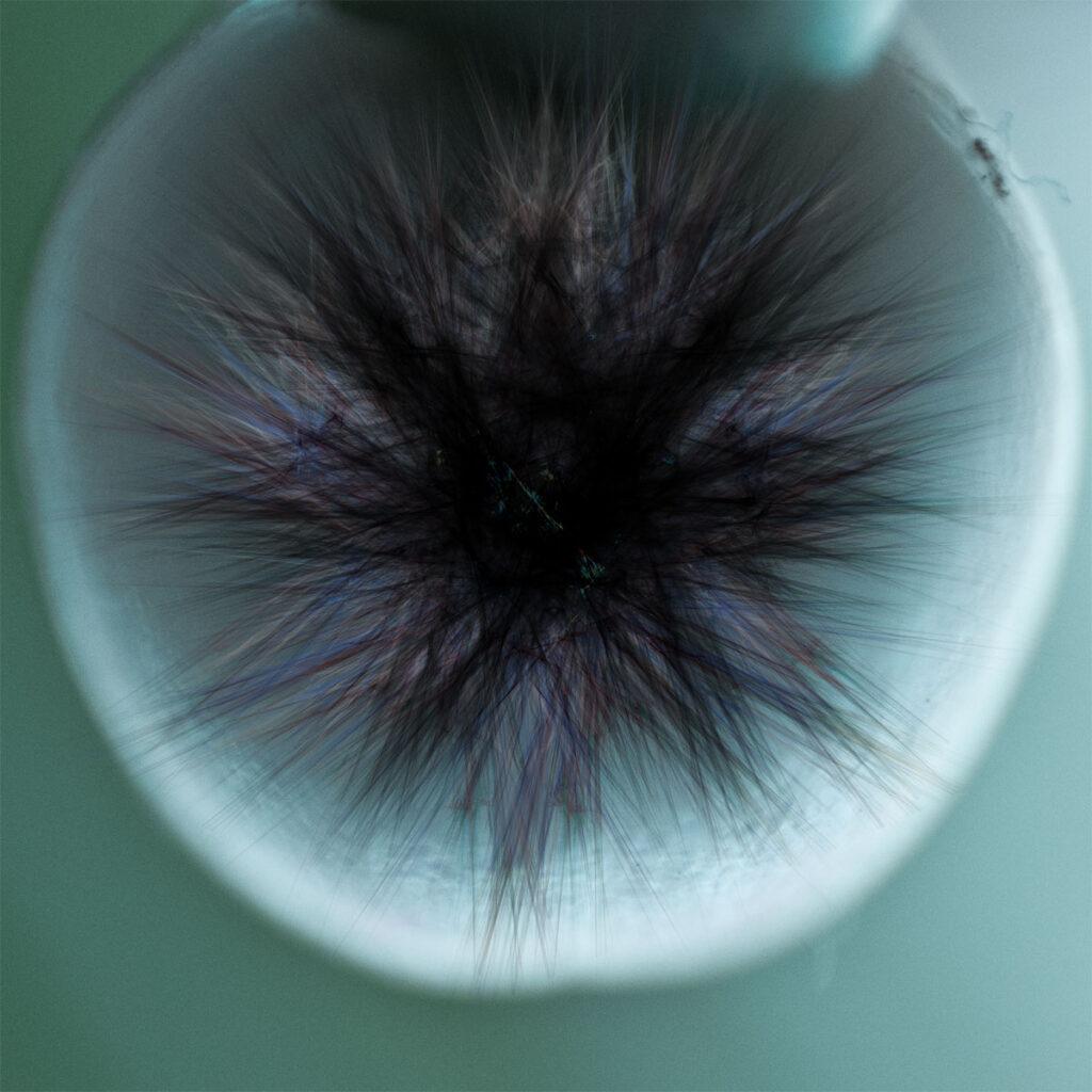 Digitale Arbeit mit Fraktalen, erstellt mit Apophysis, und Fotografie
